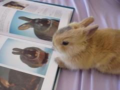 Web Creativeと受託について考えているウサギ